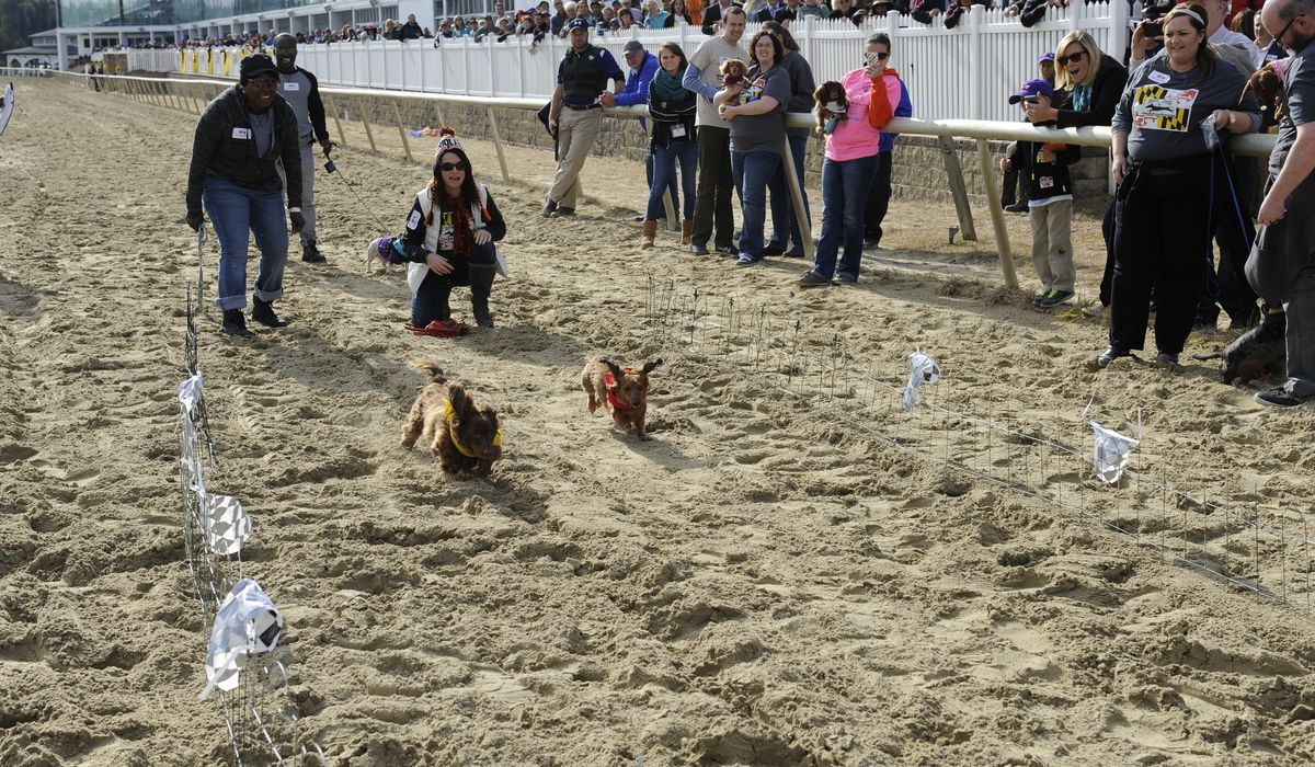 eventL weinerdogs 101715 021
